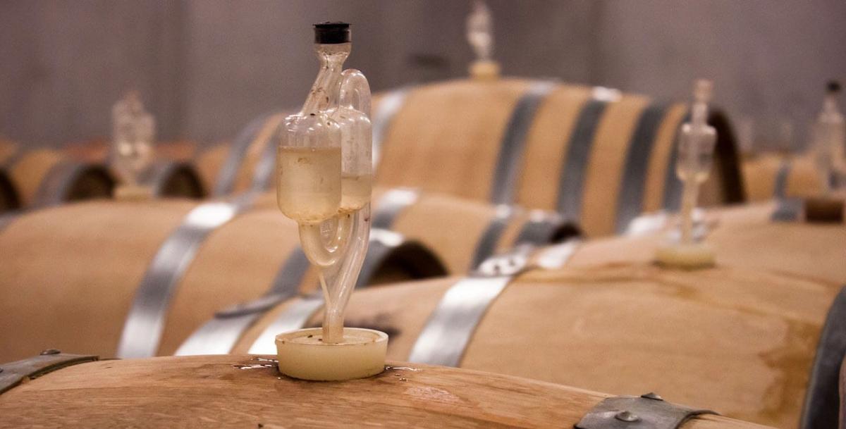 wine tour adventure - tuscany - wine school